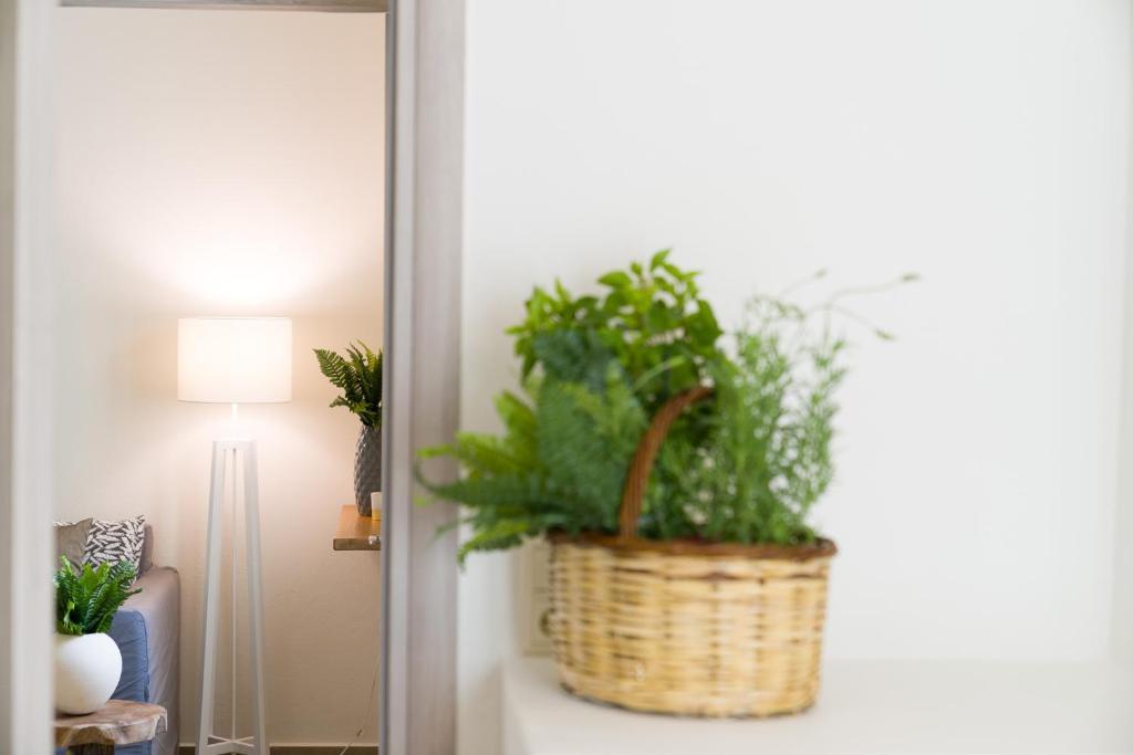 standard apartment (6)